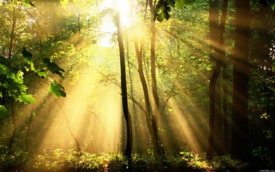 Будуев призвал перейти к цифровизации в лесной сфере