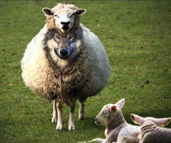 Импортозамещение «в овечьей шкуре»