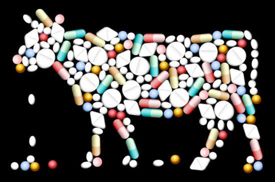 Типизация контрактов для ветеринарии